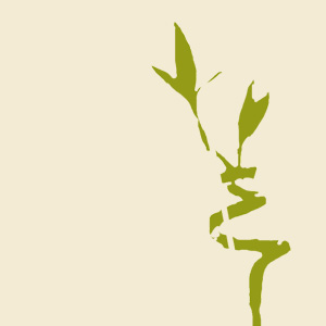 bambus-quadrat